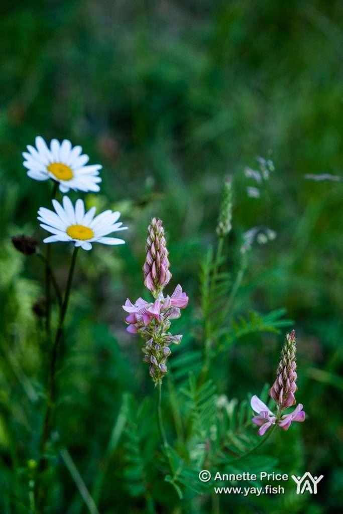 Wildflowers, Up Nately, Hampshire, UK.
