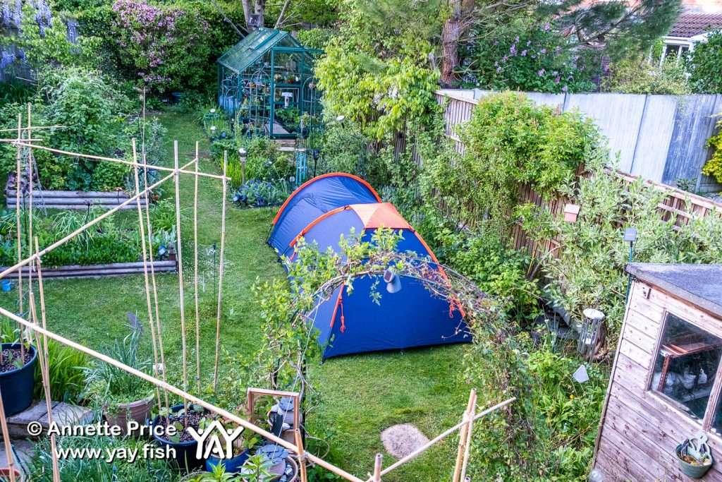 Garden camping in Wokingham, Berkshire, UK.