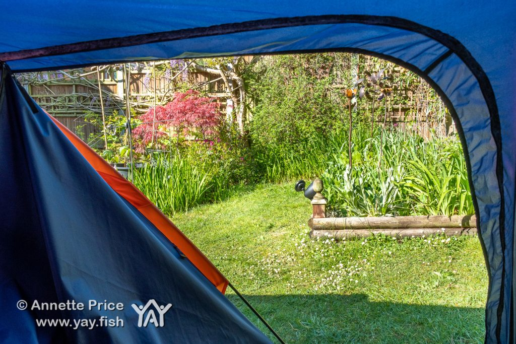 Unzipping the tent - the morning view. Garden Camping.