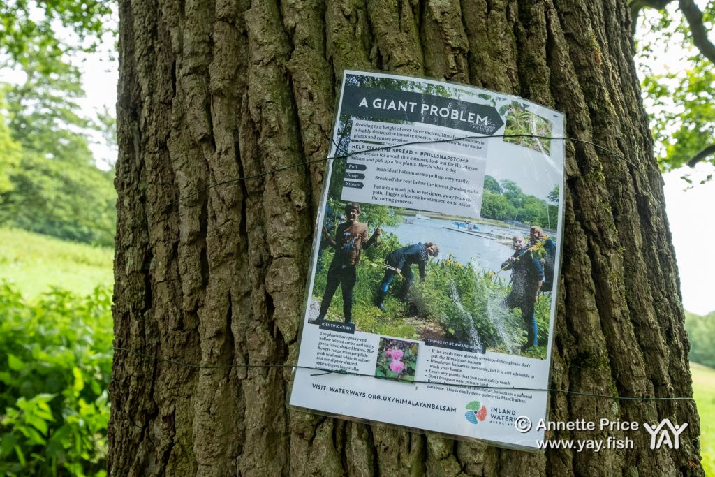Poster warning about the invasive Himalayan balsam plant. Hazeley, Hampshire. UK.